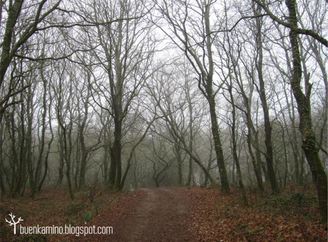 bosque del camino ingles