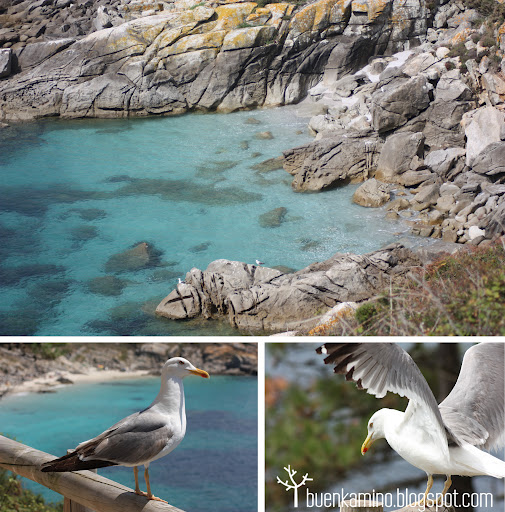 Cala y gaviotas Islas Cíes