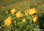 Flores silvestres Marmolada