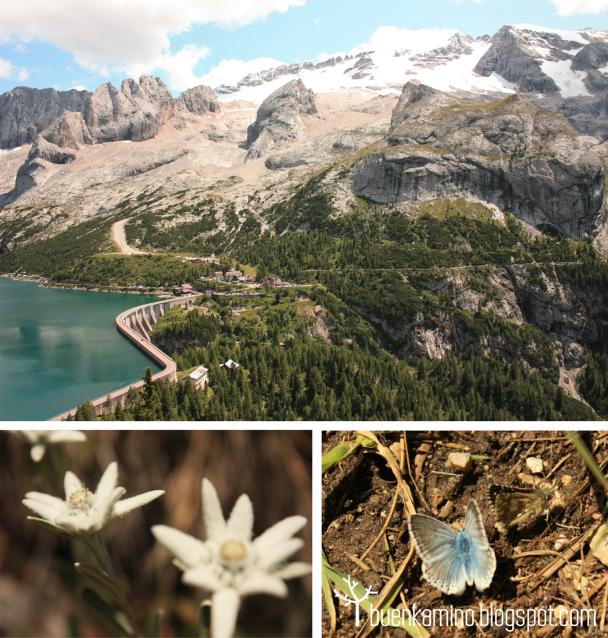 Lago Fedaia y flor Edelweiss Alpes Dolomitas Italia