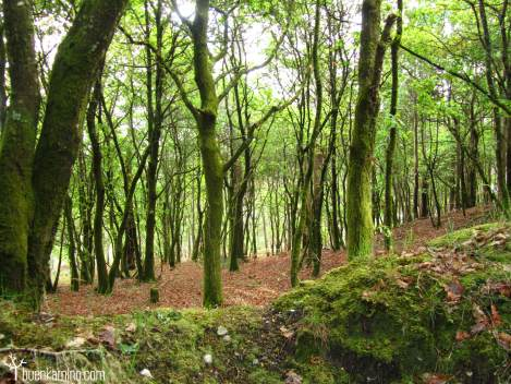 Camino Finisterre bosque