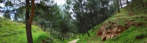 Pinar Ecce Homo