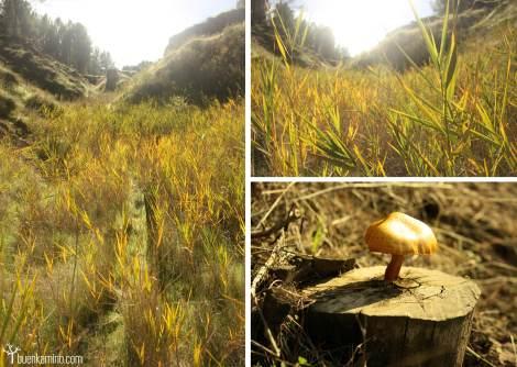 Vegetación y setas los Cerros