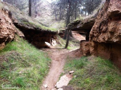 Camino Los Cerros Bosque