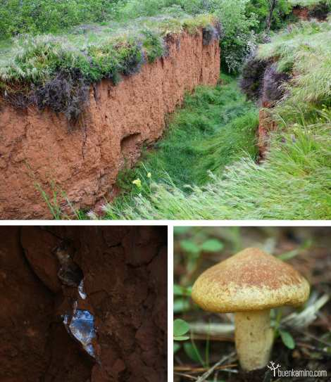 Vegetacion y minerales Parque Natural