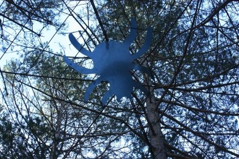 araña en el bosque aragon brujas
