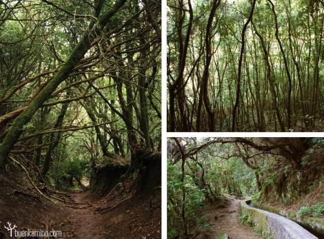Bosques la Palma Canarias