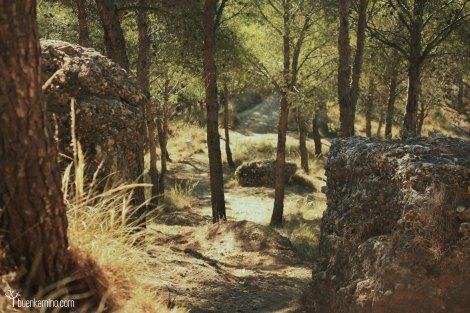 Bosque los Cerros Alcala de Henares
