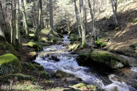 Bosque Arroyo del Sestil Canencia