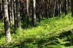 Bosque de la Isla