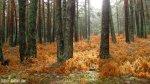 Bosque de la Isla Madrid