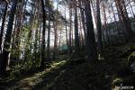 Pinar Bosque de la Isla
