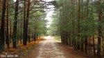 Pinar Bosque La Isla