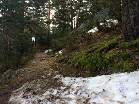 Bosque  ruta sierra madrid