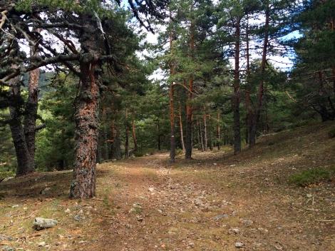 Bosque ruta facil Madrid