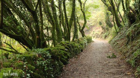 Ruta a Santiago bosques