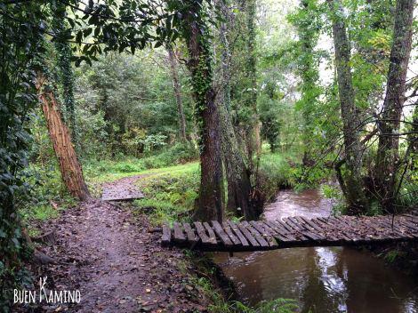 Desvío bosque Camino Portugués
